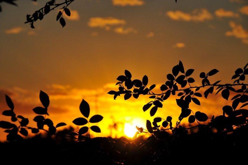sunset through the bush